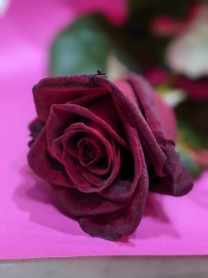 Single Red Rose in craft paper